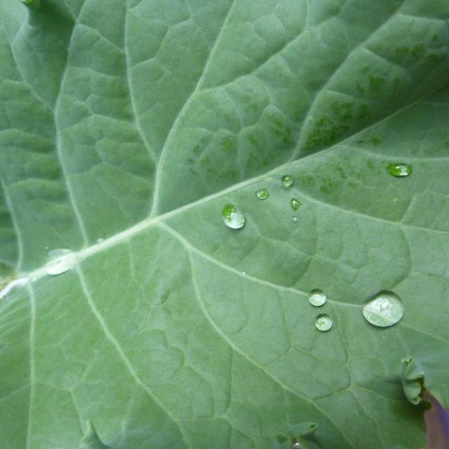 leaf square